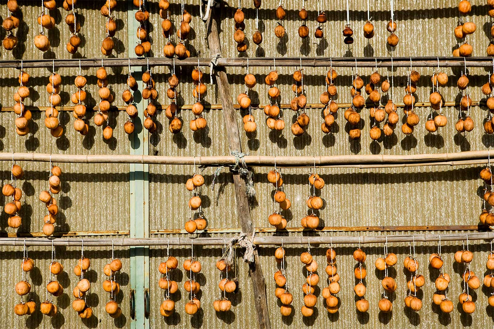 Persimmons drying outdoors in Gifu Japan